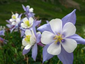 apts colorado: co flower