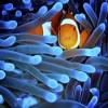 apts colorado: fishies