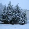 apts colorado: snow