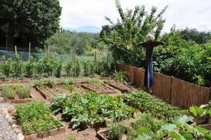 apts colorado: veggie garden